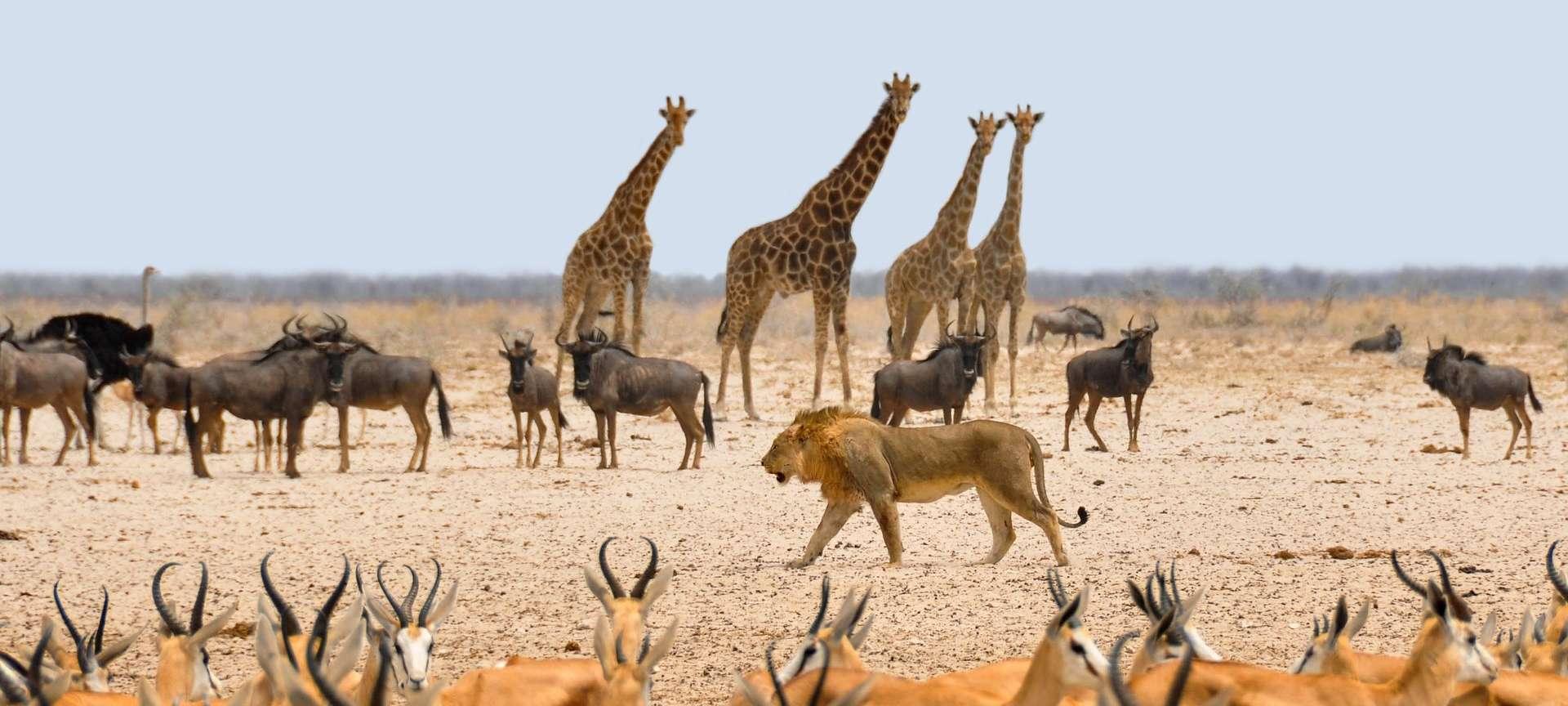 Национальный Парк Этоша   Sima Safari
