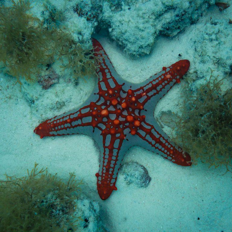 כוכב ים ספארי זנזיבר טיול מאורגן