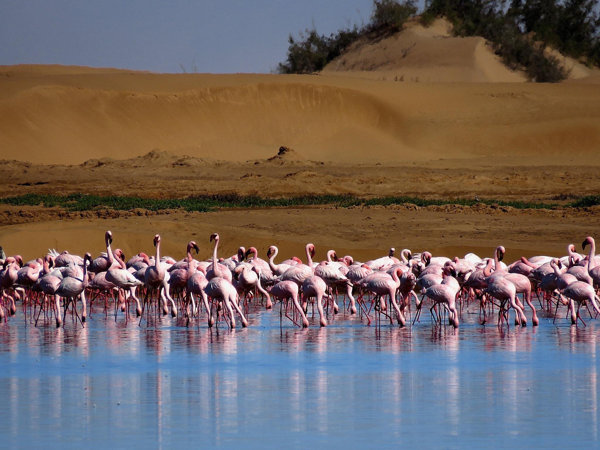 פלמינגו נמיביה טיול מאורגן